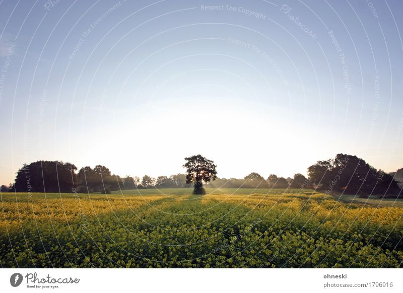 In the morning Nature Landscape Cloudless sky Autumn Beautiful weather Tree Field Forest Contentment Joie de vivre (Vitality) Peaceful To console Calm Life