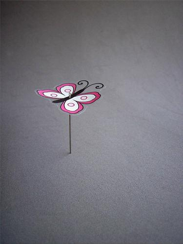 square Colour photo Studio shot Close-up Deserted Copy Space right Copy Space top Copy Space bottom Neutral Background butterfly collection Animal Butterfly 1