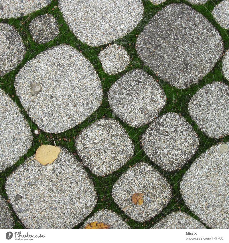 Nature Plant Summer Leaf Street Cold Autumn Grass Garden Stone Lanes & trails Park Places Gloomy Round