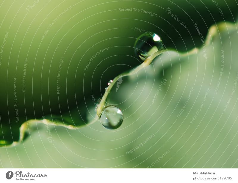 Two Drops Nature Water Sun Plant Autumn Style Drops of water Cool (slang) Elements Abstract