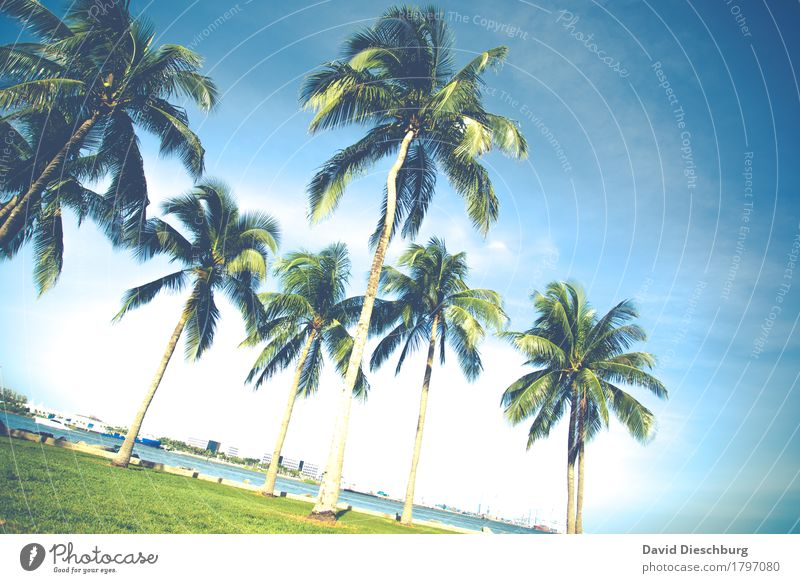 palm Vacation & Travel Tourism Trip Adventure Far-off places Summer Summer vacation Sun Beach Ocean Island Landscape Cloudless sky Beautiful weather Plant Tree