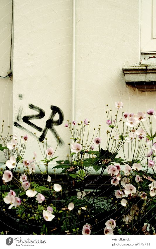 Nature Beautiful Plant Summer Flower House (Residential Structure) Autumn Life Window Wall (building) Graffiti Wall (barrier) Dream Art Pink Poverty