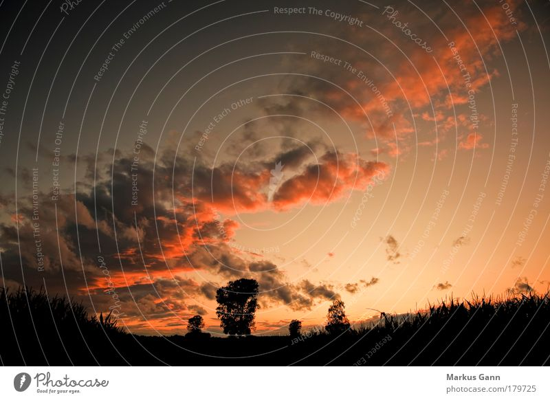 Sunset Colour photo Exterior shot Deserted Evening Twilight Sunrise Wide angle Summer Nature Landscape Sky Clouds Warmth Field Jump Yellow Serene Calm Idyll