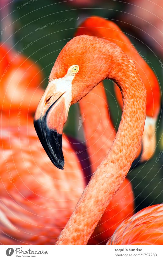 flamingo Animal Wild animal Flamingo Animal face 1 Group of animals Orange Pink Red Zoo Colour photo Multicoloured Exterior shot Animal portrait Profile