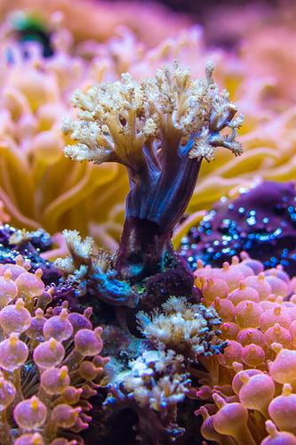 sea tree Plant Water Tree Flower Exotic Aquatic plant Reef Coral reef Ocean Multicoloured Violet Pink Anemone Forest Dive Colour photo Detail