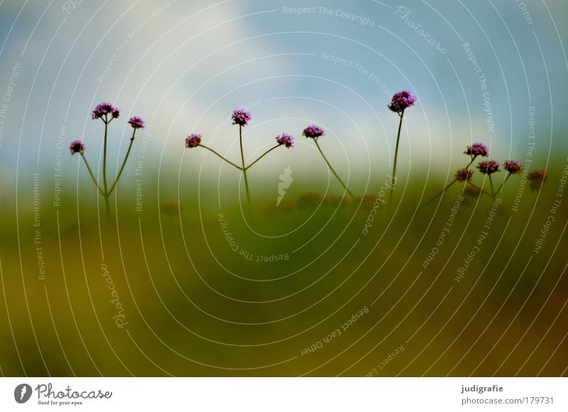 meadow Colour photo Exterior shot Day Environment Nature Plant Summer Flower Grass Meadow Growth Fragrance Optimism Hide Stretching Blossom Blur