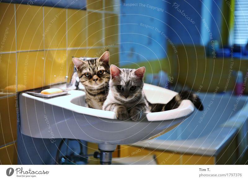 Cat and tomcat Animal Pet 2 Calm Bathroom Sink Colour photo Interior shot Artificial light