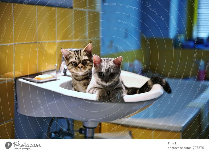 Cat Animal Calm Bathroom Pet Sink