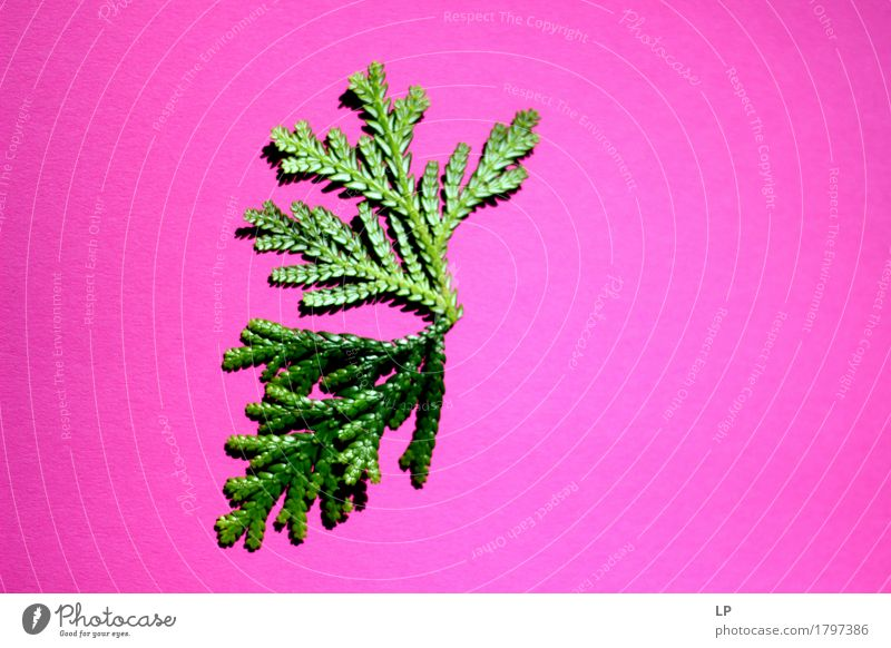 pink/green Plant Christmas & Advent Summer Leaf Winter Forest Environment Life Spring Autumn Lifestyle Style Feasts & Celebrations Health care Moody Together