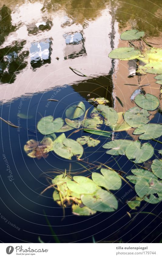 upside down Colour photo Exterior shot Experimental Pattern Deserted Copy Space bottom Day Reflection Blur Nature Summer Beautiful weather Plant Leaf River bank