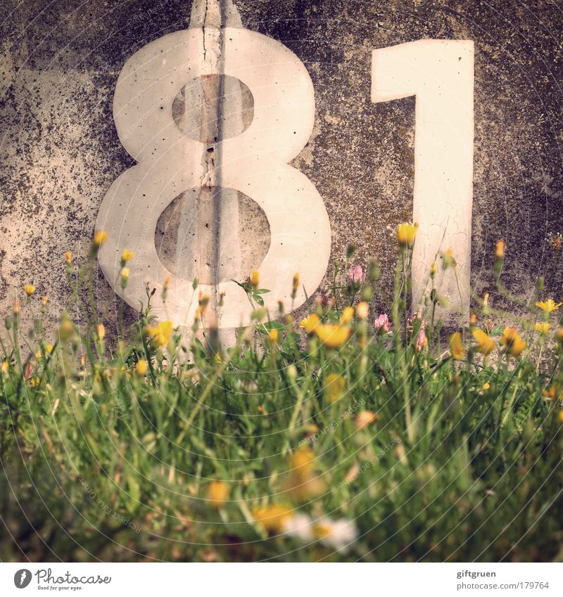 White Flower Plant Meadow Grass Wall (barrier) Birthday Concrete Characters Information Digits and numbers Sign Blossoming Square Furrow Calculation