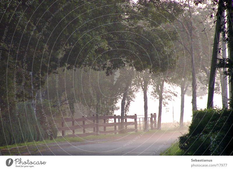 Fog on the Lower Rhine Niederrhein Electricity pylon Tree Pasture Wesel district Morning