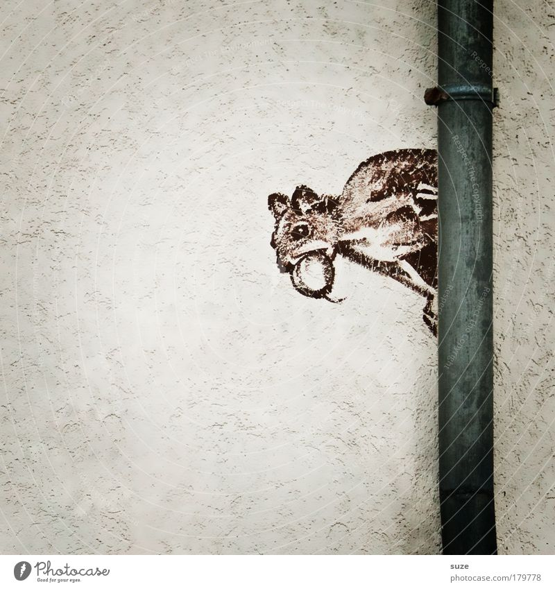 chaffinch Wall (barrier) Wall (building) Facade Animal Wild animal Squirrel Rodent 1 Sign Graffiti Funny Cute Brown Gray White Drawing Mural painting Street art