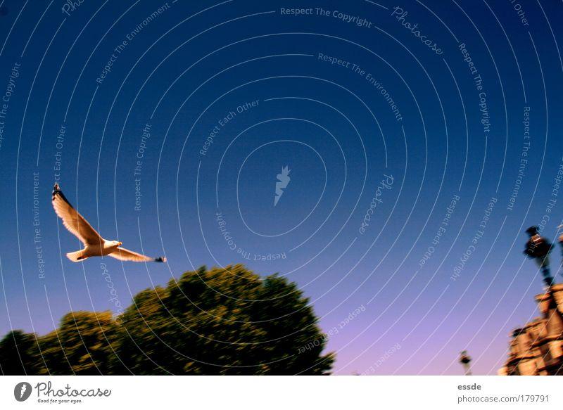 Tree Blue Summer Animal Life Movement Bird Hiking Pink Elegant Environment Flying Gold Energy Free Tall