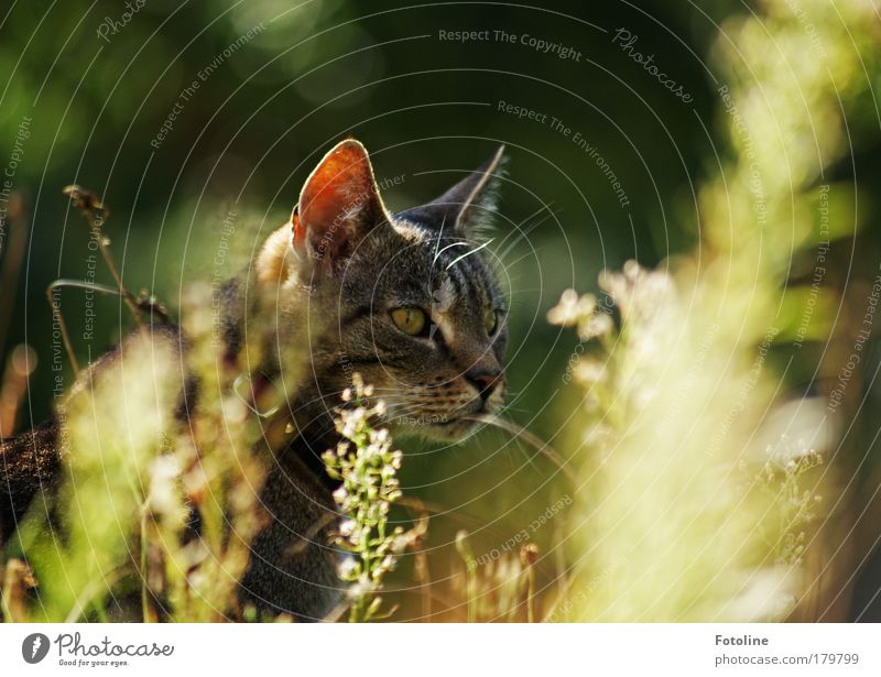 Cat Nature Beautiful Plant Sun Summer Animal Environment Meadow Autumn Grass Warmth Garden Spring Bright Park