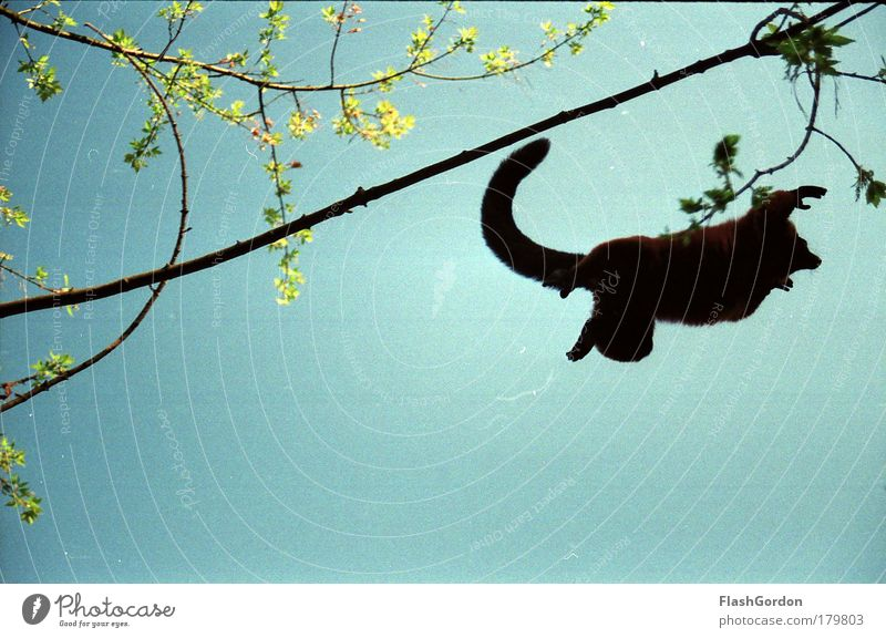 Animal Jump Flying Wild Monkeys Wild animal Variegated Lemur