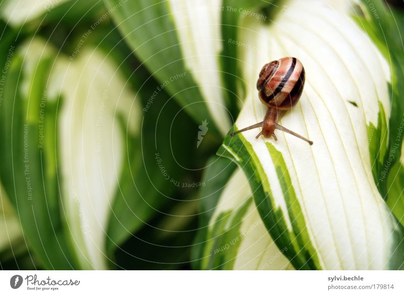 snail child Nature Plant Animal Leaf Wild animal Snail Small Cute Brown Yellow Green Slowly Movement Crawl Stripe Cautious Delicate Fragile Colour photo