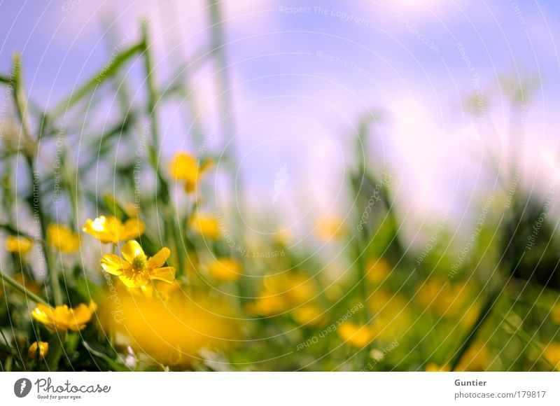 Nature Sky White Flower Green Plant Summer Calm Leaf Clouds Yellow Relaxation Meadow Blossom Grass Happy