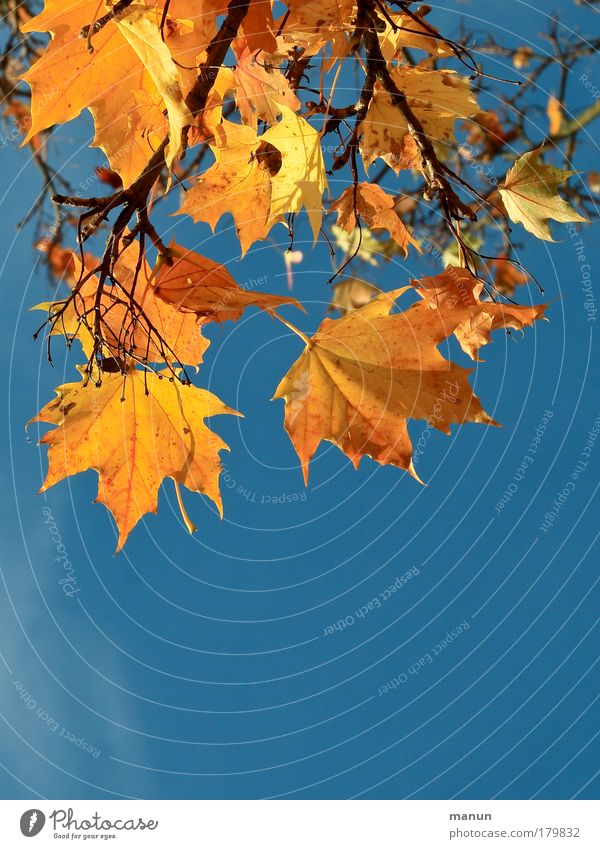 Nature Blue Leaf Calm Yellow Warmth Autumn Park Illuminate Fresh Gold Happiness Transience Beautiful weather Change Well-being