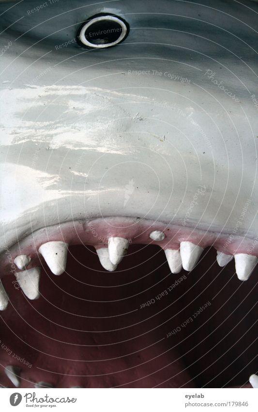 Animal Eyes Dark Gray Underwater photo Fear Glittering Wet Wild Wild animal Speed Fish Threat Point Kitsch Animal face