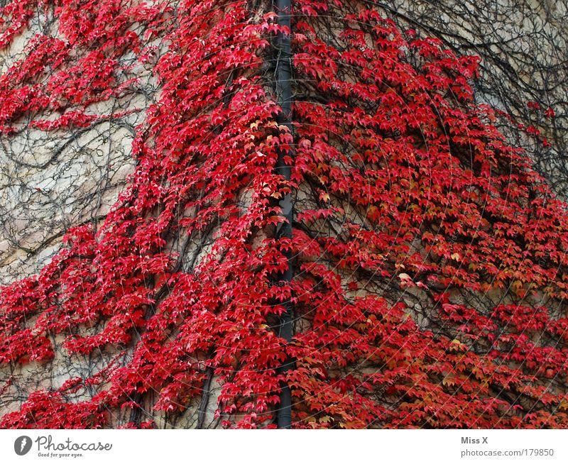 At the red corner Colour photo Exterior shot Deserted Copy Space left Copy Space right Day Vacation & Travel Trip Nature Autumn Plant Bushes Leaf Foliage plant