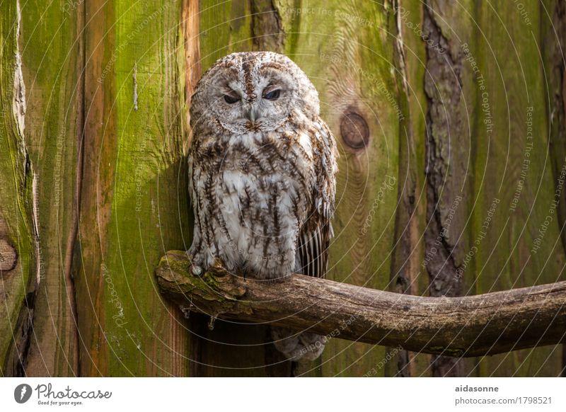 Loneliness Animal Bird Wild animal Sit Love of animals Owl birds Eagle owl