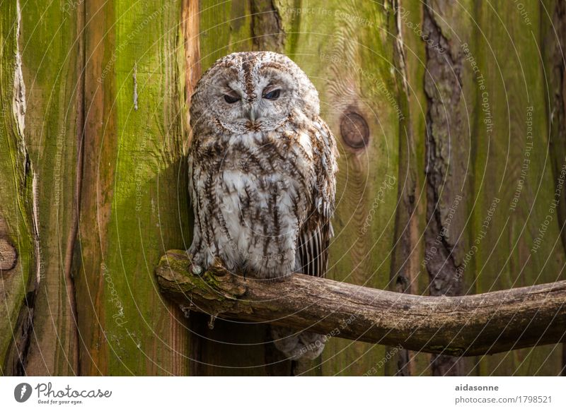 owl Wild animal Bird 1 Animal Love of animals Loneliness Owl birds Eagle owl Sit Colour photo Exterior shot Deserted Day Looking Looking into the camera Forward