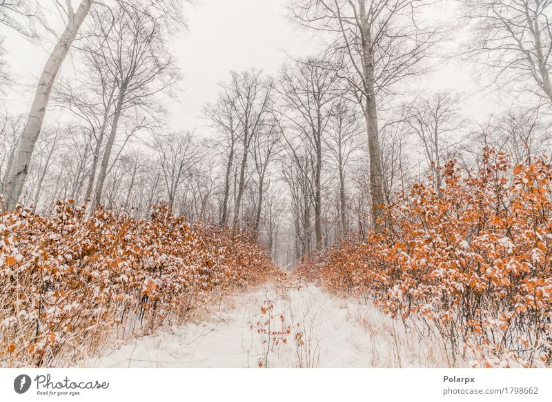 Beech trees covered with snow in a forest Beautiful Winter Snow Environment Nature Landscape Sky Weather Fog Tree Grass Forest Cool (slang) Gray White