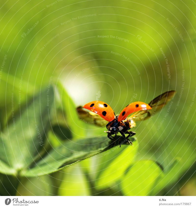 Nature Beautiful Green Plant Red Summer Vacation & Travel Black Animal Meadow Landscape Environment Flying Wet Free Wing