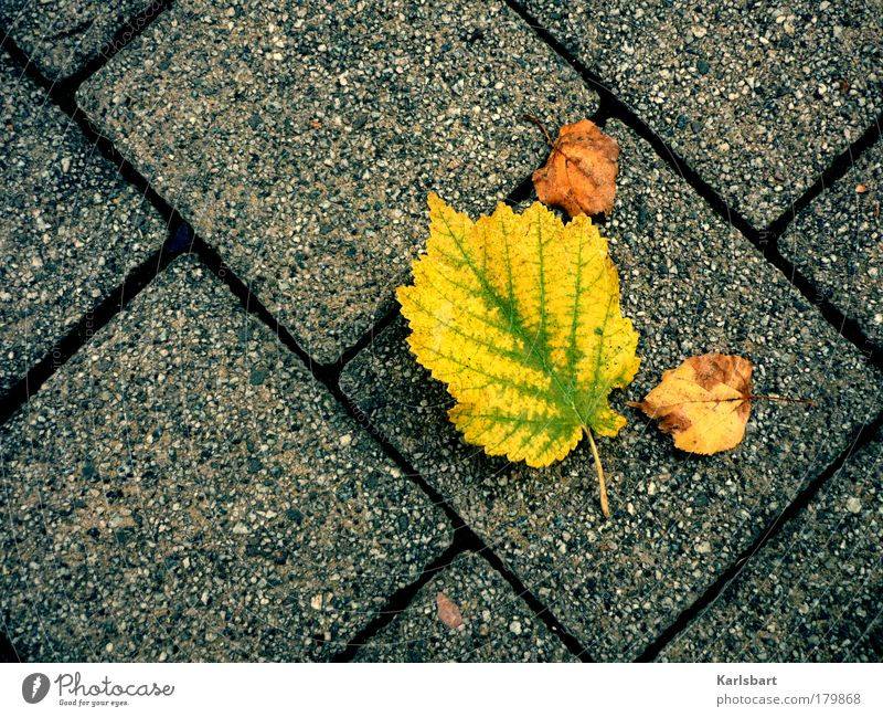autumn. leaves. Lifestyle Design Relaxation Thanksgiving Environment Nature Autumn Climate Climate change Tree Leaf Park Meadow Street Lanes & trails Movement