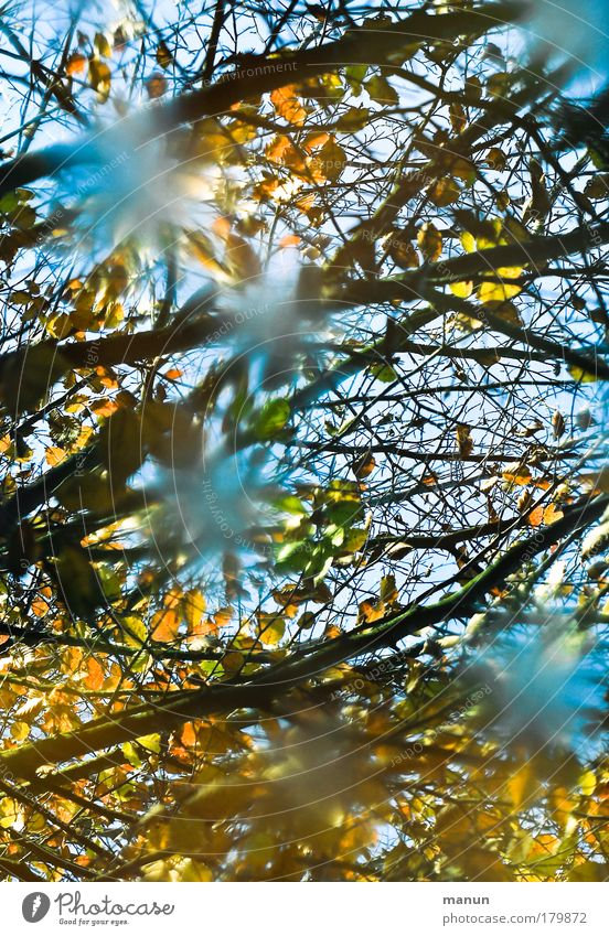 Nature Water Tree Leaf Calm Yellow Relaxation Autumn Lake Gold Design Change Transience Turquoise Joie de vivre (Vitality) Reflection