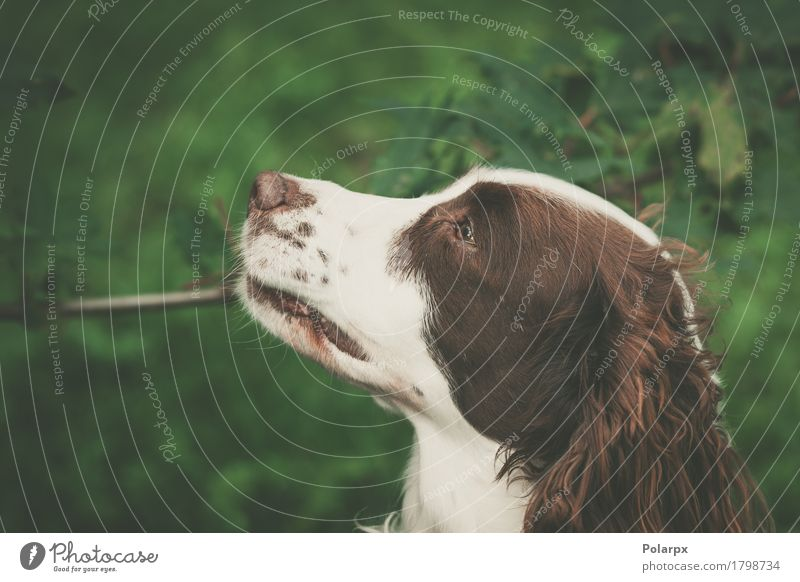 Cute dog in nature Dog Nature Summer Green White Landscape Animal Face Environment Meadow Natural Grass Playing Brown Work and employment Contentment