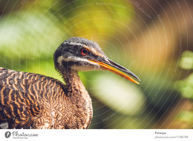 Close-up of a sunbittern bird in a colorful rainforest Nature Beautiful Leaf Animal Forest Face Natural Bird Rain Wild Stand Feather Virgin forest Beak South