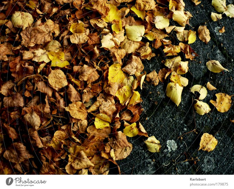 foliage. tanned. Lifestyle Design Thanksgiving Environment Nature Autumn Climate Climate change Leaf Park Street Lanes & trails Old Movement Flying Lie Brown