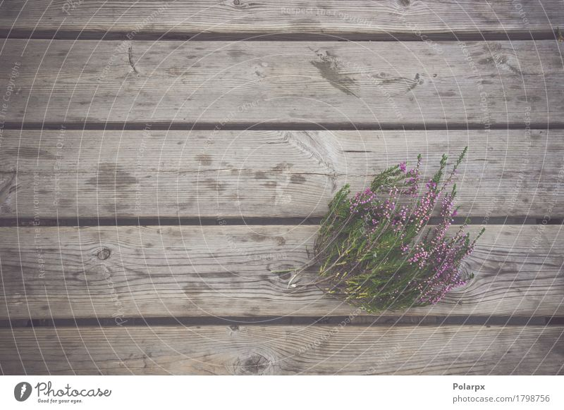 Heather plant with purple flowers Summer Garden Decoration Table Feasts & Celebrations Nature Plant Autumn Flower Leaf Blossom Bouquet Wood Natural Retro Green
