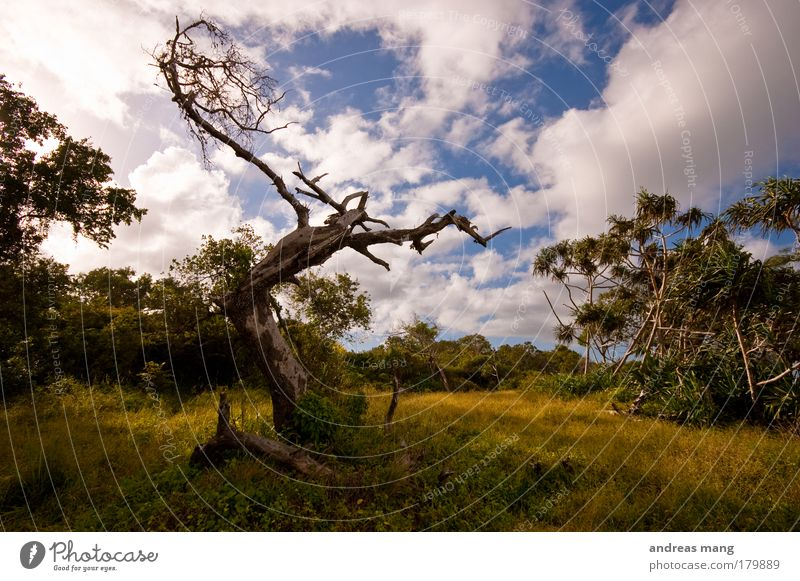 reaching the sky Colour photo Exterior shot Deserted Evening Shadow Contrast Deep depth of field Wide angle Nature Landscape Animal Sky Clouds Summer