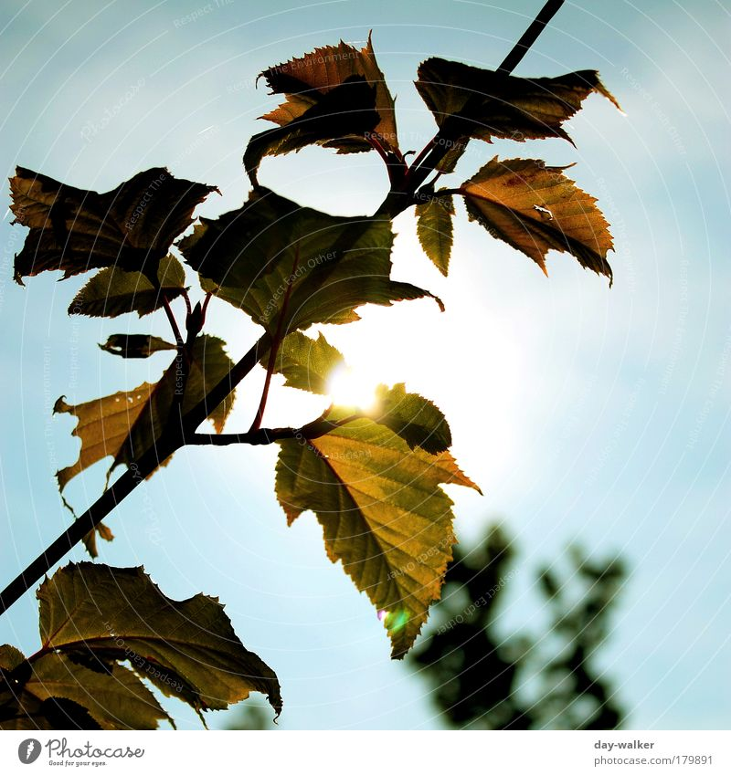 autumn colours Colour photo Exterior shot Deserted Day Light Shadow Contrast Silhouette Reflection Sunlight Sunbeam Back-light Blur Nature Plant Air Sky Clouds