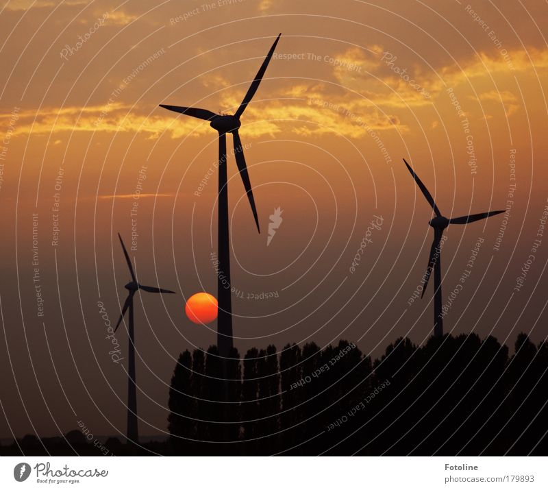 Nature Tree Red Black Landscape Wind Weather Environment Gold Earth Industry Energy industry Technology Climate Science & Research Wind energy plant