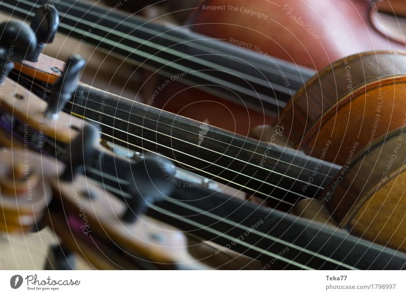 Violins I Style Music Collection Wood Esthetic fiddles violin making Colour photo Interior shot Studio shot Close-up Detail Macro (Extreme close-up) Deserted