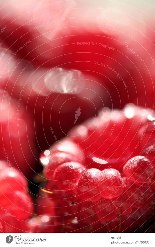 Red Nutrition Healthy Fruit Fresh Natural Agriculture Harvest Organic produce Raspberry Fruity Vegetarian diet