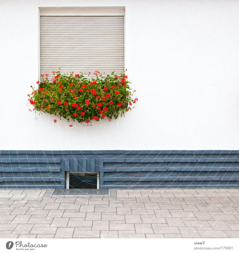 friendly introverted Colour photo Multicoloured Exterior shot Detail Copy Space right Deep depth of field Central perspective Flower Village