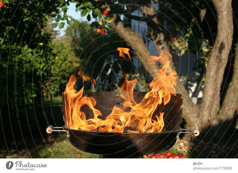 Nature Tree Red Summer Garden Metal Park Orange Feasts & Celebrations Blaze Energy Fire Dangerous Hot Nutrition Idyll