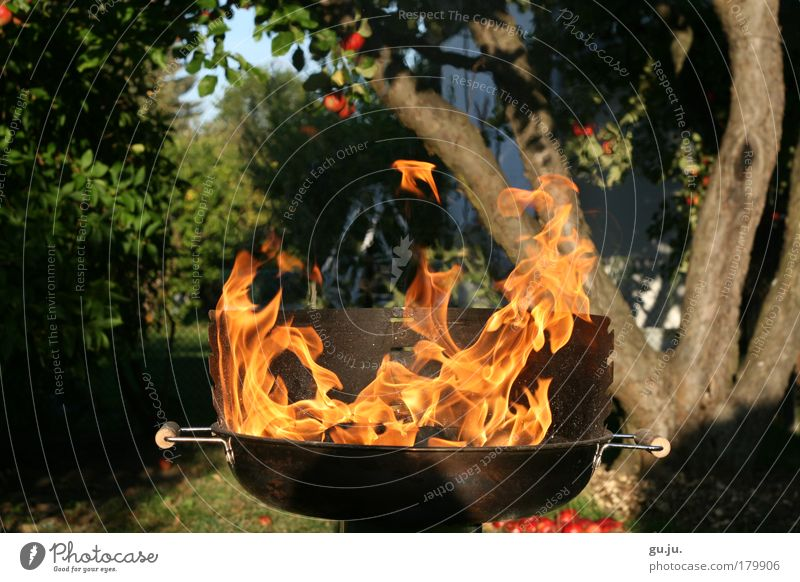 THE FLAMING GRILL MKII Colour photo Exterior shot Evening Sunlight Summer Feasts & Celebrations Nature Fire Garden Barbecue (apparatus) Hot Barbecue (event)