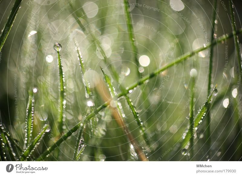 Nature Plant Summer Water Relaxation Meadow Grass Rain Glittering Drops of water Climate Lawn Drop Sphere Blade of grass Dew