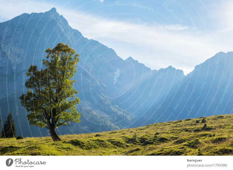 solitude standing Clouds Sunlight Autumn Weather Beautiful weather Plant Tree Alps Mountain Peak Blue Green Calm Loneliness Uniqueness Maple tree
