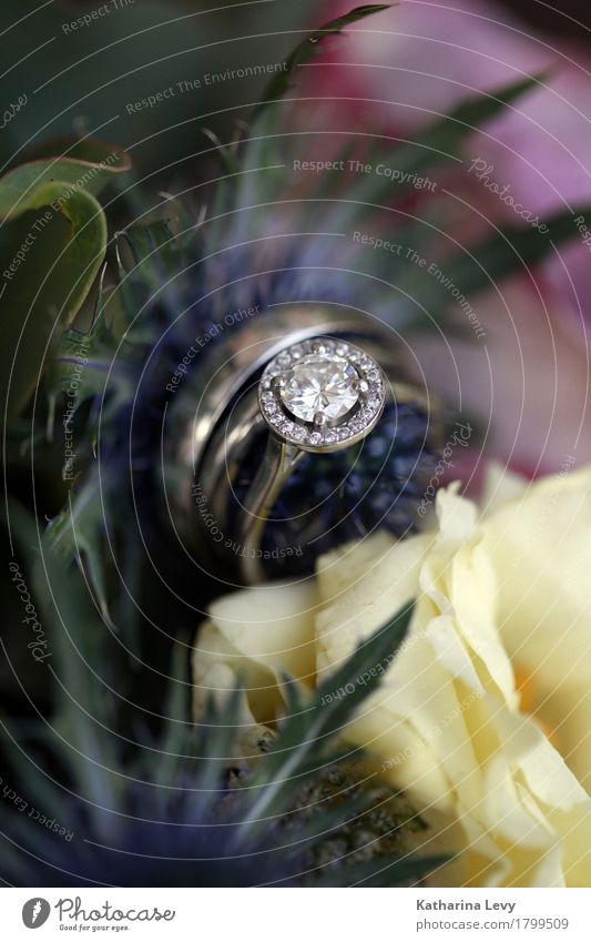 Wedding ring Engagement ring Wedding ring Bridal bouquet Flowers Luxury Elegant Style Plant Rose Decoration Bouquet Glittering Beautiful Blue Yellow Pink Silver
