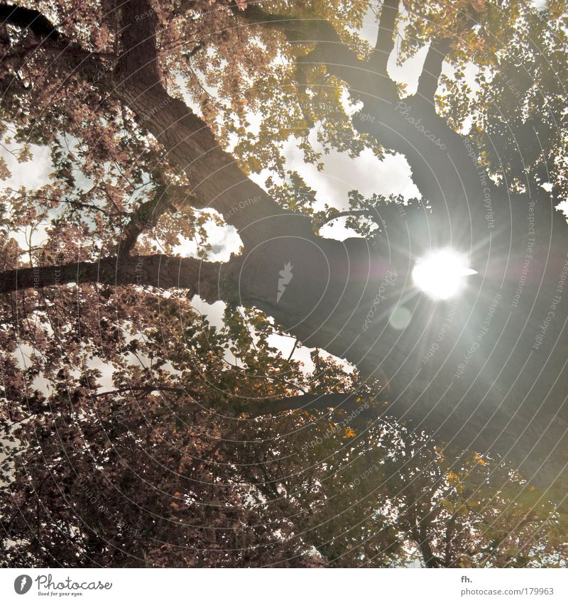 Falling Leaves Colour photo Subdued colour Multicoloured Structures and shapes Copy Space top Copy Space bottom Day Twilight Shadow Silhouette