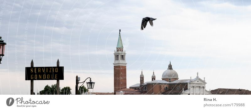 Blue Vacation & Travel Moody Religion and faith Bird Wait Flying Tourism Authentic Joie de vivre (Vitality) To enjoy Perspective Pigeon Ease Venice Sightseeing