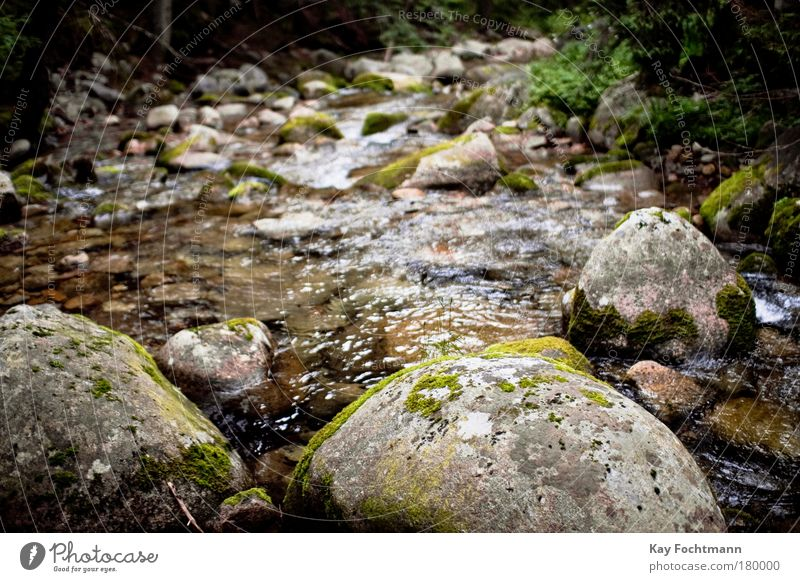Nature Water Plant Summer Forest Environment Landscape Stone Wet Trip River Moss Brook Flow