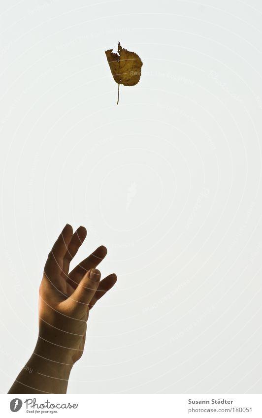 Hand Sun Plant Leaf Park Air Arm Fingers Touch Grasp Magic Trick Reach Limp Hypnotic Sky only